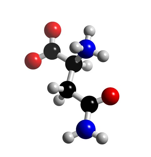 Picture of Asparagine 3D model