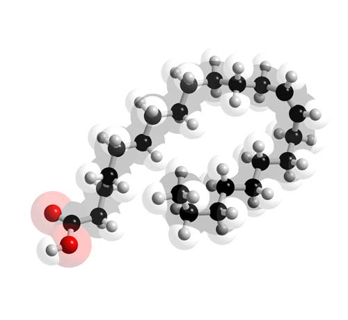 Picture of Erucic acid 3D model