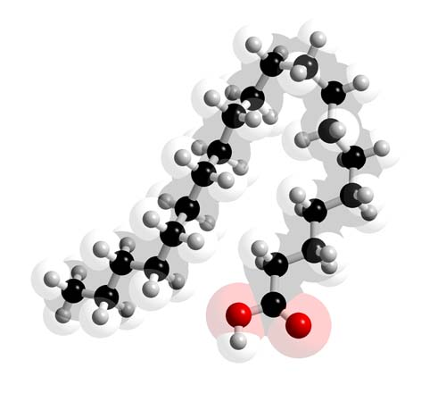 Picture of Icosanoic acid 3D model