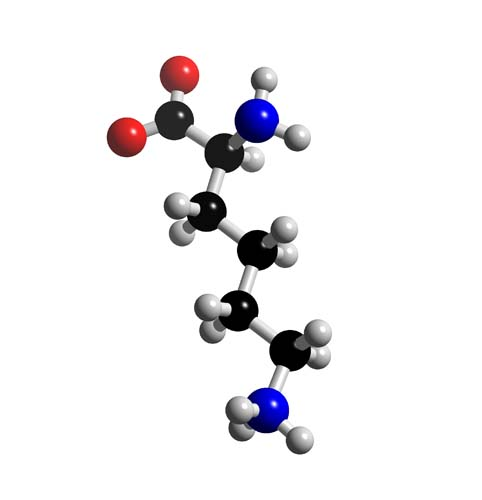 Picture of Lysine 3D model