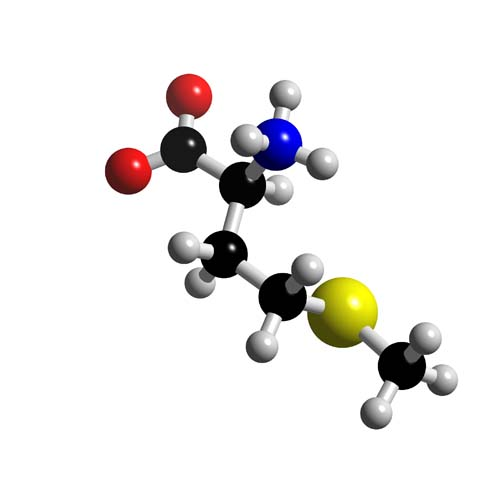 Picture of Methionine 3D model