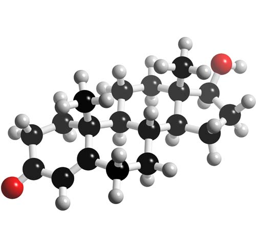 Picture of Testosterone 3D model