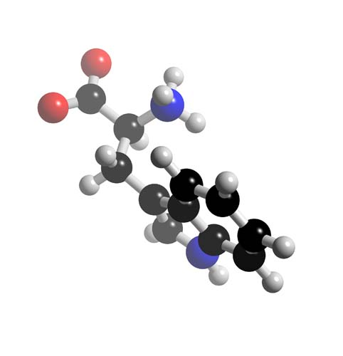 Picture of Tryptophan 3D model