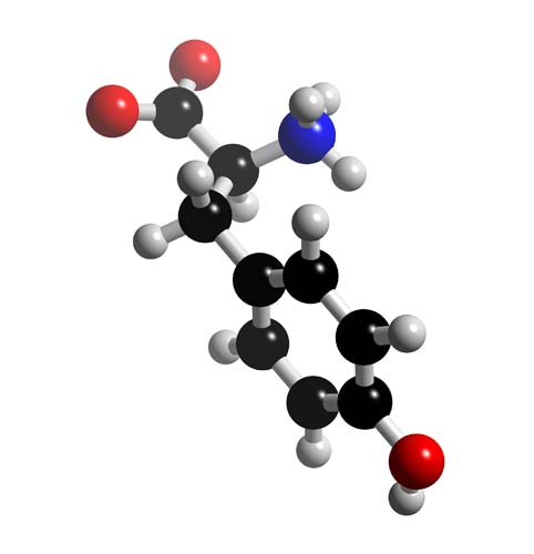 Picture of Tyrosine 3D model