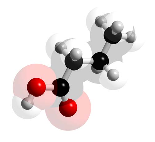 Picture of Butyric acid 3D model